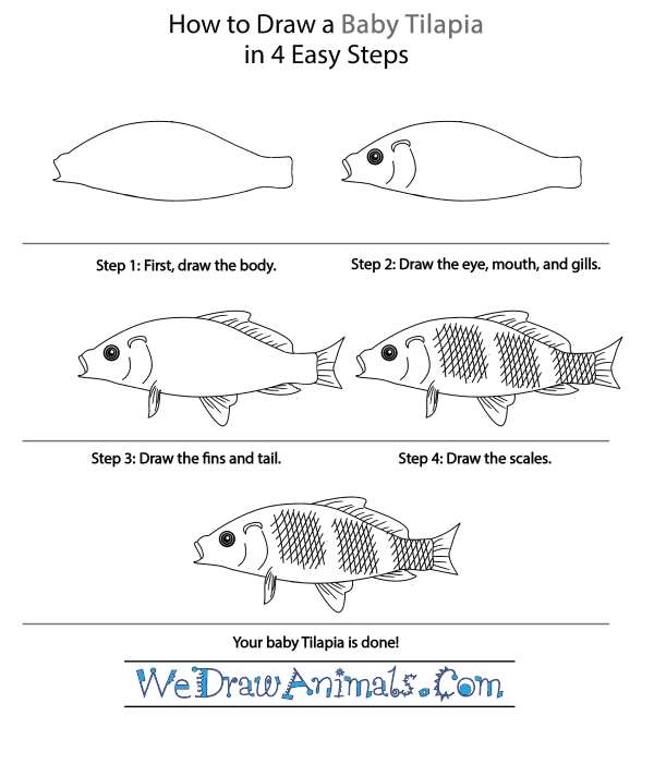 How to Draw a Baby Tilapia - Step-by-Step Tutorial