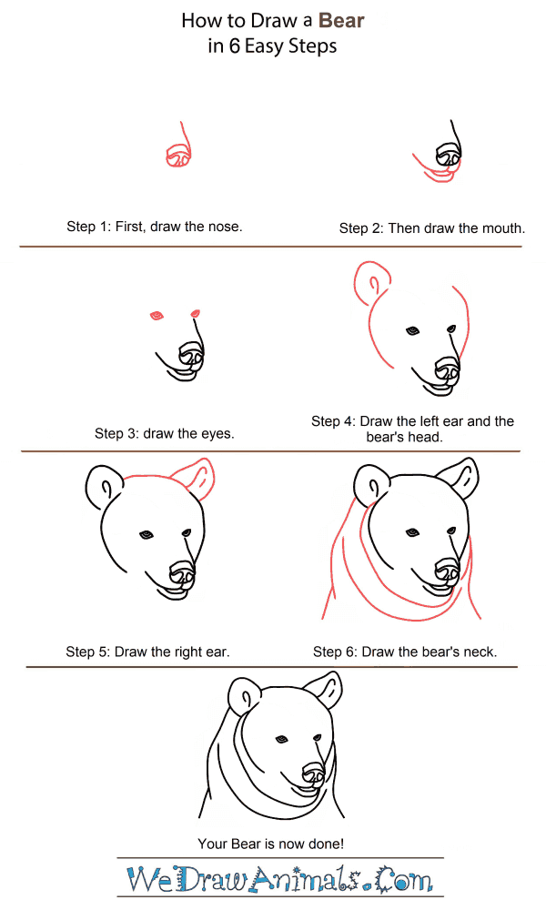 How to Draw a Bear Head - Step-by-Step Tutorial