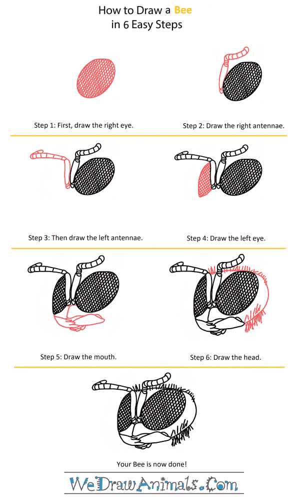 How to Draw a Bee Head - Step-by-Step Tutorial