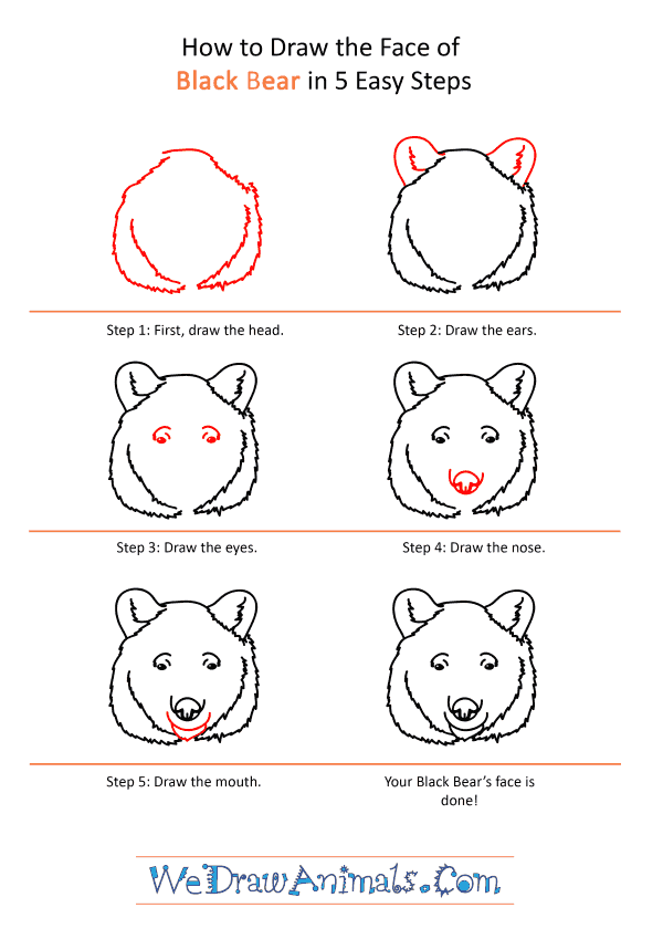 How to Draw a Black Bear Face - Step-by-Step Tutorial