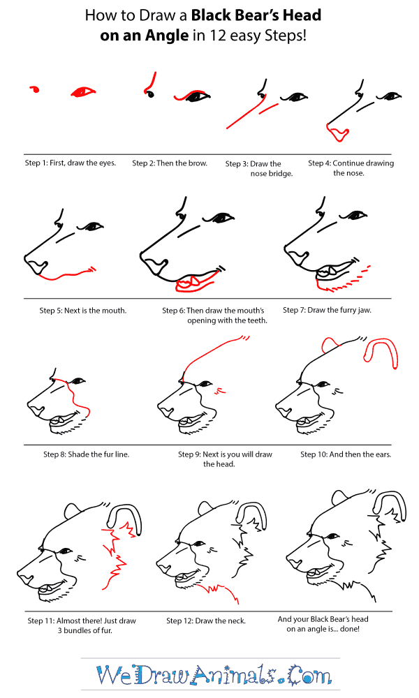How to Draw a Black Bear Head - Step-by-Step Tutorial