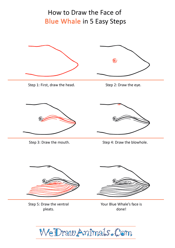 How to Draw a Blue Whale Face - Step-by-Step Tutorial