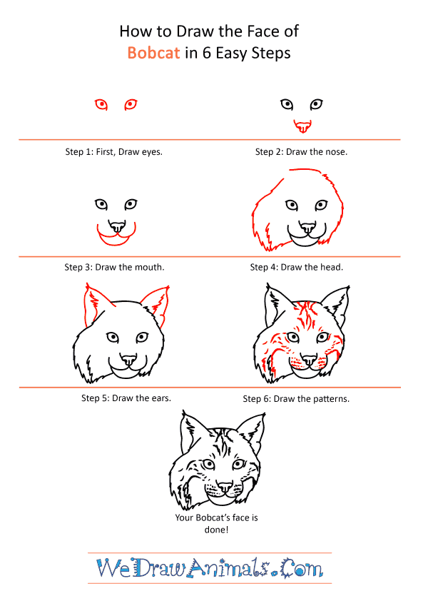 How to Draw a Bobcat Face - Step-by-Step Tutorial