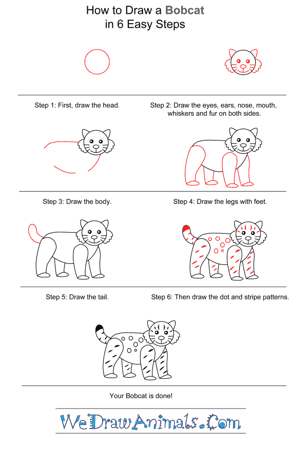 How to Draw a Bobcat for Kids - Step-by-Step Tutorial