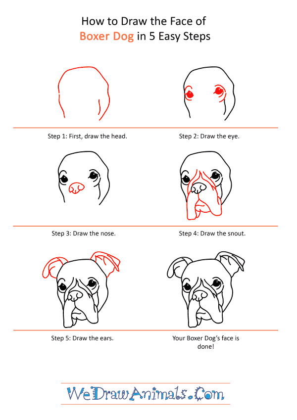 How to Draw a Boxer Dog Face - Step-by-Step Tutorial