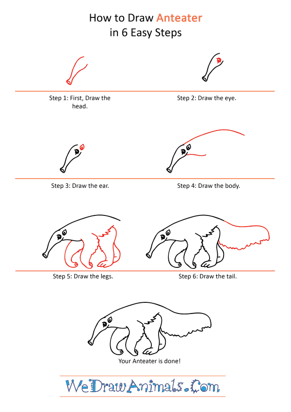 How to Draw a Cartoon Anteater - Step-by-Step Tutorial