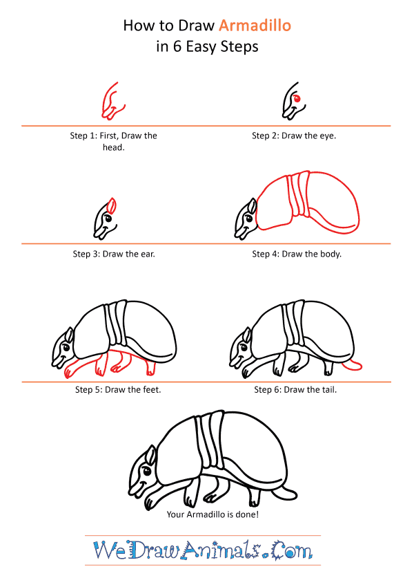 How to Draw a Cartoon Armadillo - Step-by-Step Tutorial