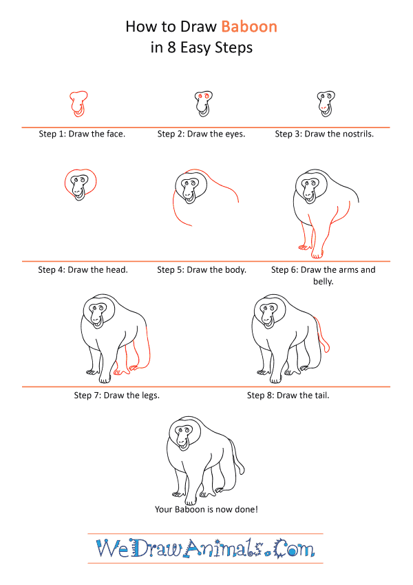 How to Draw a Cartoon Baboon - Step-by-Step Tutorial