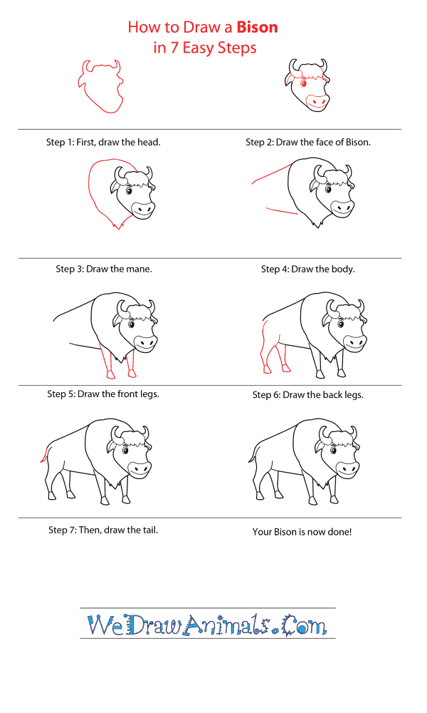 How to Draw a Cartoon Bison - Step-by-Step Tutorial