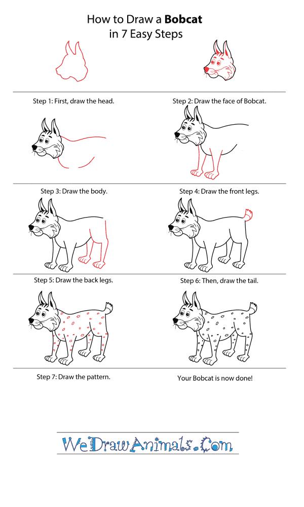 How to Draw a Cartoon Bobcat - Step-by-Step Tutorial