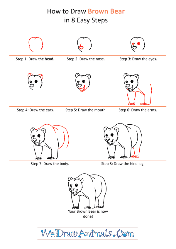 How to Draw a Cartoon Brown Bear - Step-by-Step Tutorial