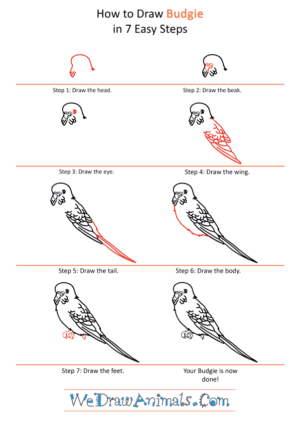 How to Draw a Cartoon Budgie - Step-by-Step Tutorial