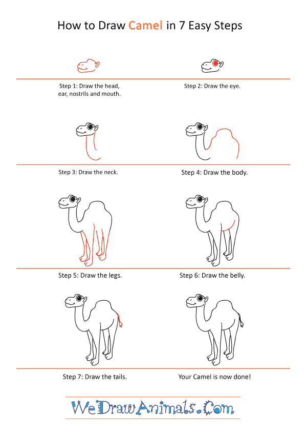 How to Draw a Cartoon Camel - Step-by-Step Tutorial