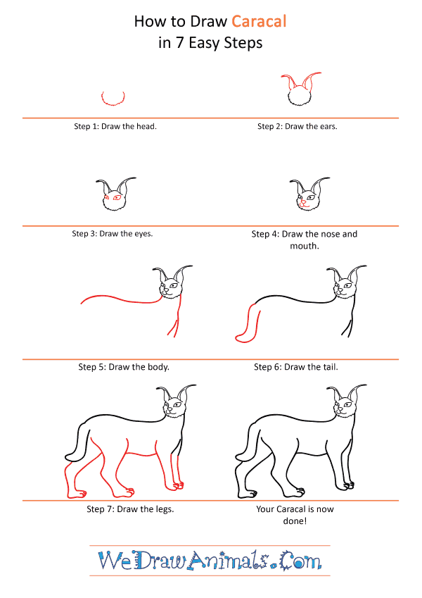 How to Draw a Cartoon Caracal - Step-by-Step Tutorial