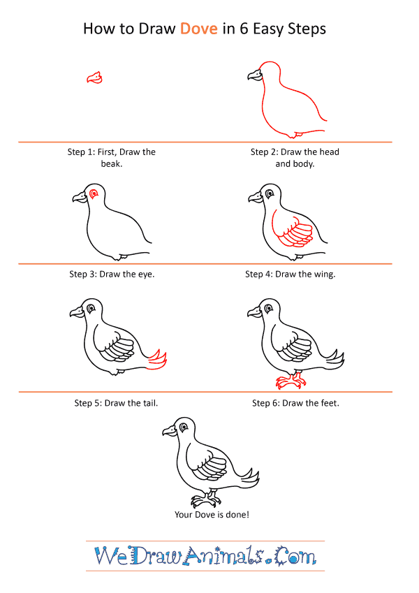 How to Draw a Cartoon Dove - Step-by-Step Tutorial