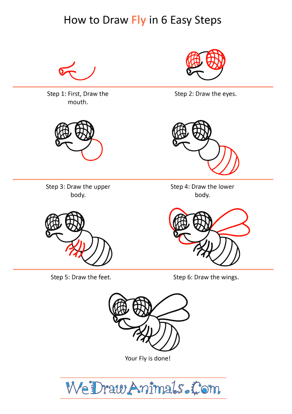 How to Draw a Cartoon Fly - Step-by-Step Tutorial