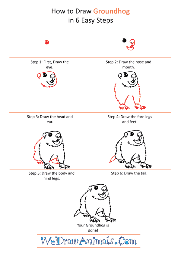 How to Draw a Cartoon Groundhog - Step-by-Step Tutorial