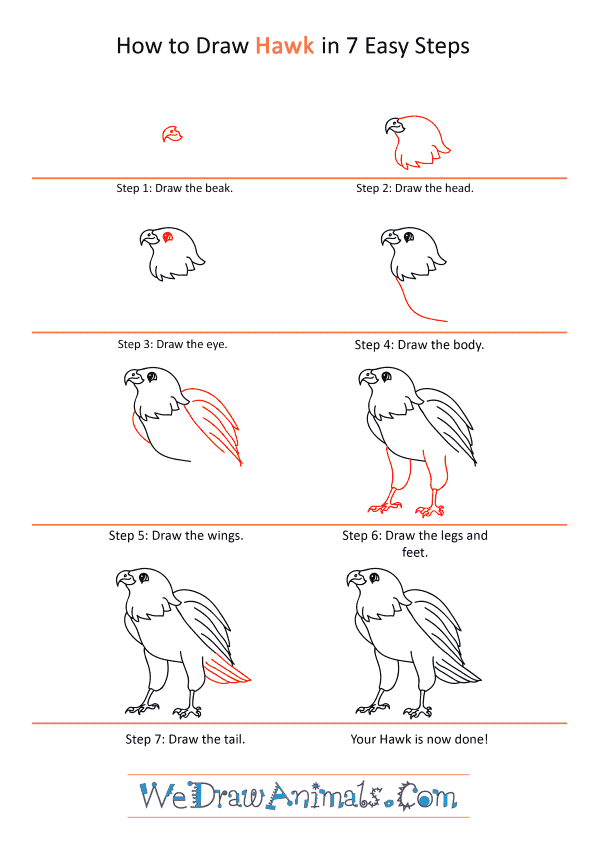 How To Draw A Cartoon Hawk