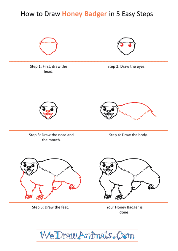 How to Draw a Cartoon Honey Badger - Step-by-Step Tutorial