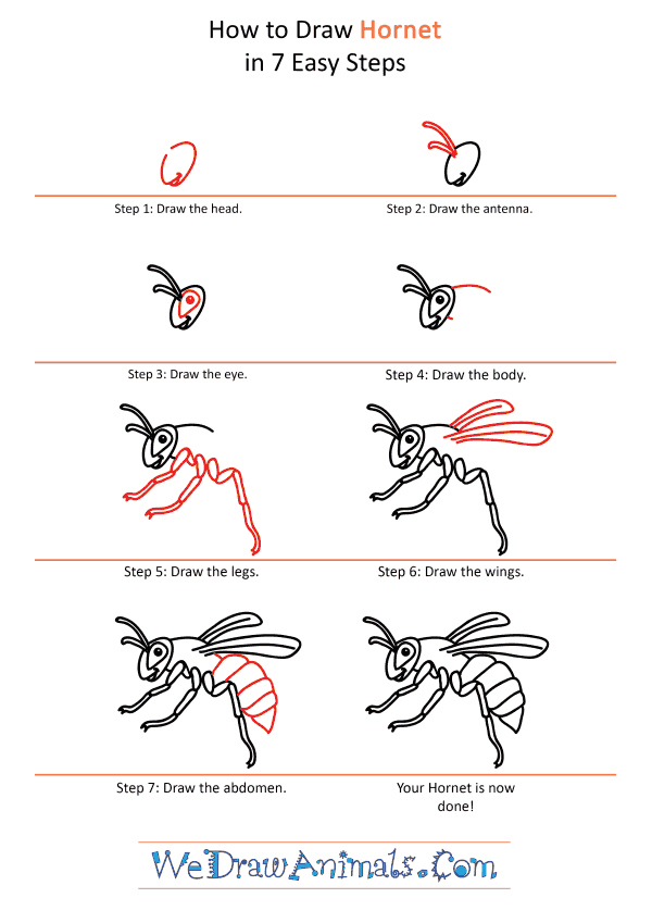 How to Draw a Cartoon Hornet - Step-by-Step Tutorial
