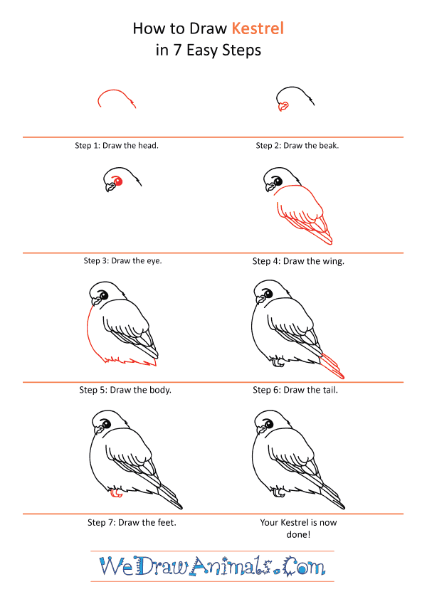 How to Draw a Cartoon Kestrel - Step-by-Step Tutorial