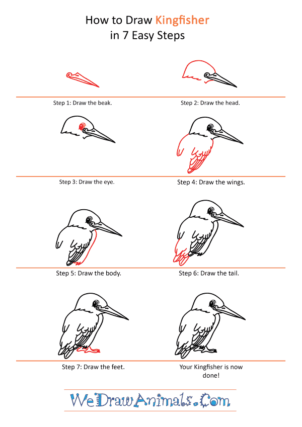 How to Draw a Cartoon Kingfisher - Step-by-Step Tutorial