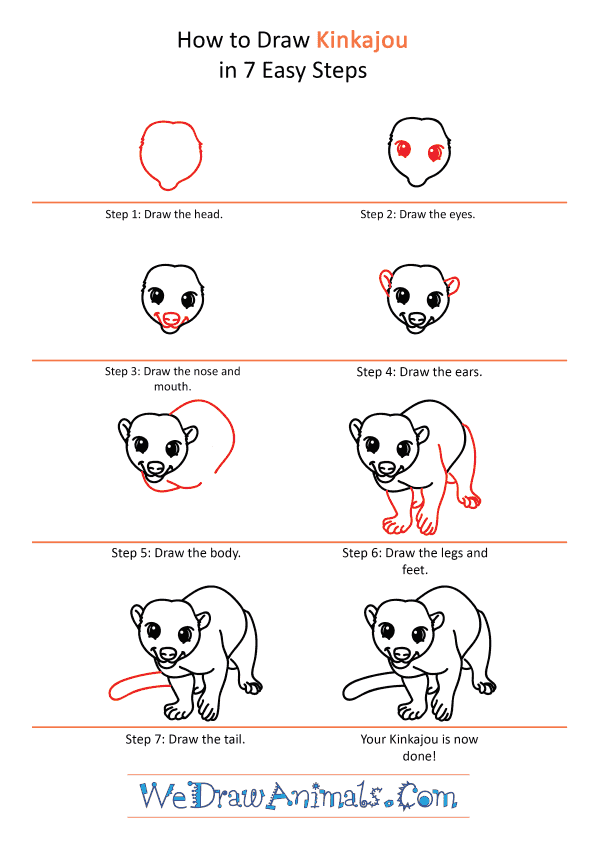 How to Draw a Cartoon Kinkajou - Step-by-Step Tutorial