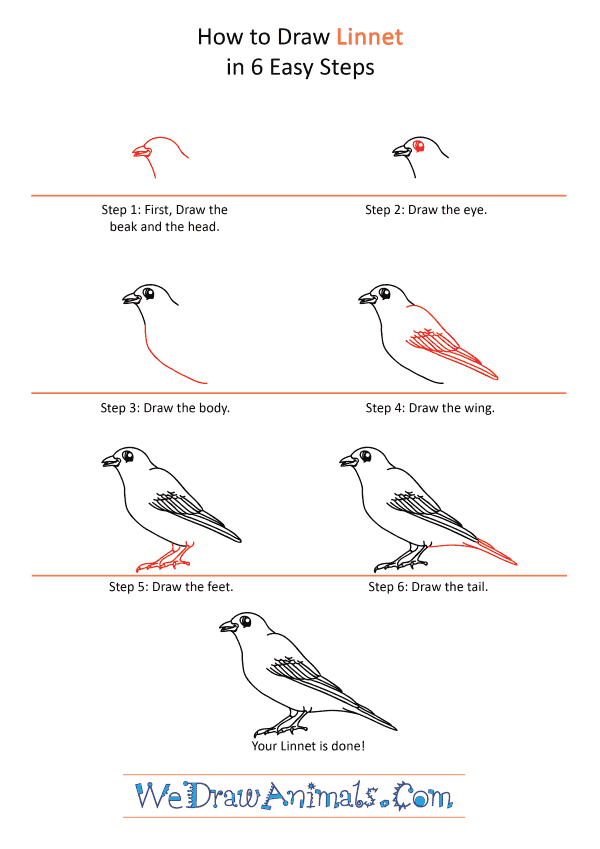 How to Draw a Cartoon Linnet - Step-by-Step Tutorial