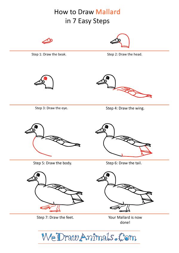 How to Draw a Cartoon Mallard - Step-by-Step Tutorial