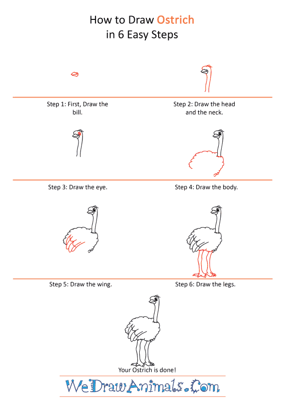 How to Draw a Cartoon Ostrich - Step-by-Step Tutorial