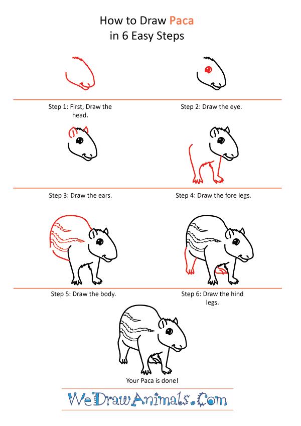 How to Draw a Cartoon Paca - Step-by-Step Tutorial