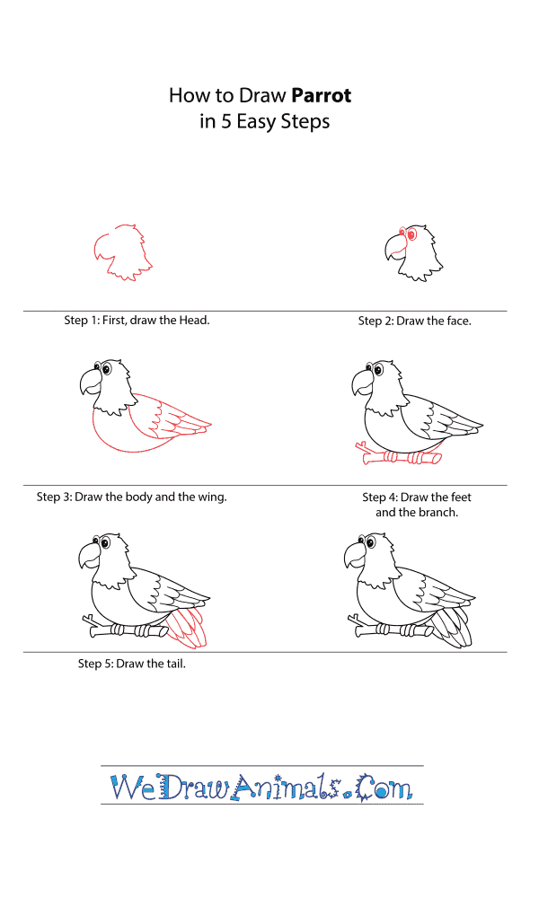 How to Draw a Cartoon Parrot - Step-by-Step Tutorial