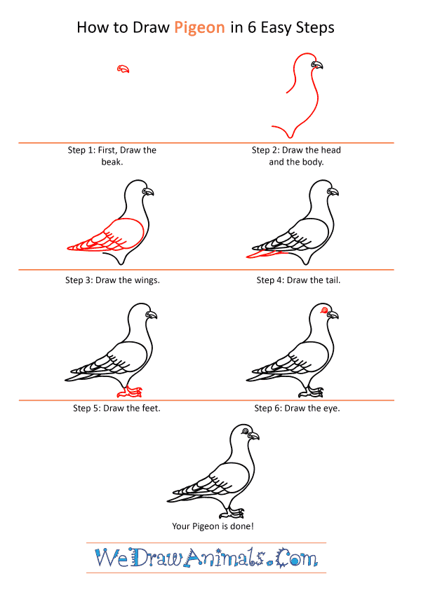 How to Draw a Cartoon Pigeon - Step-by-Step Tutorial
