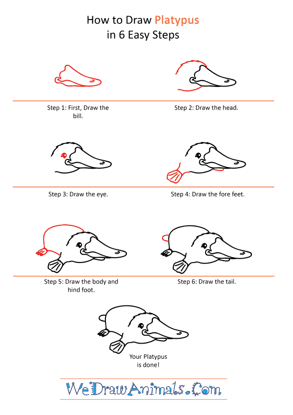 How to Draw a Cartoon Platypus - Step-by-Step Tutorial