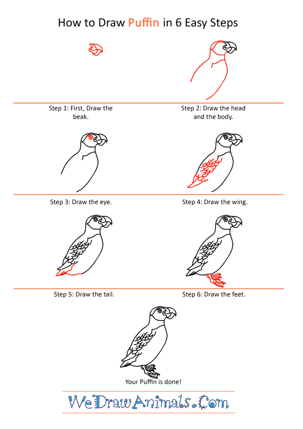 How to Draw a Cartoon Puffin - Step-by-Step Tutorial