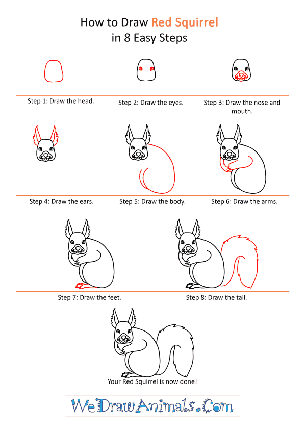 How to Draw a Cartoon Red Squirrel - Step-by-Step Tutorial