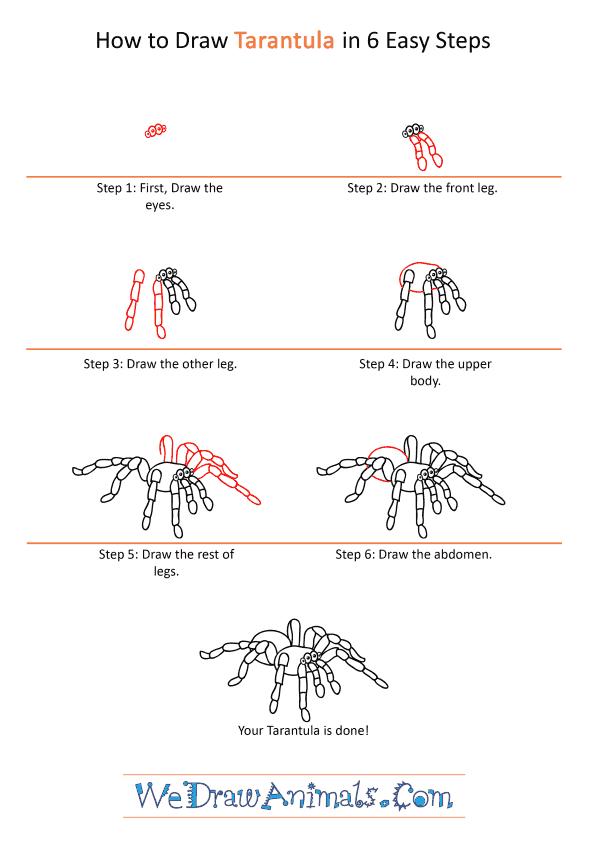 How to Draw a Cartoon Tarantula - Step-by-Step Tutorial