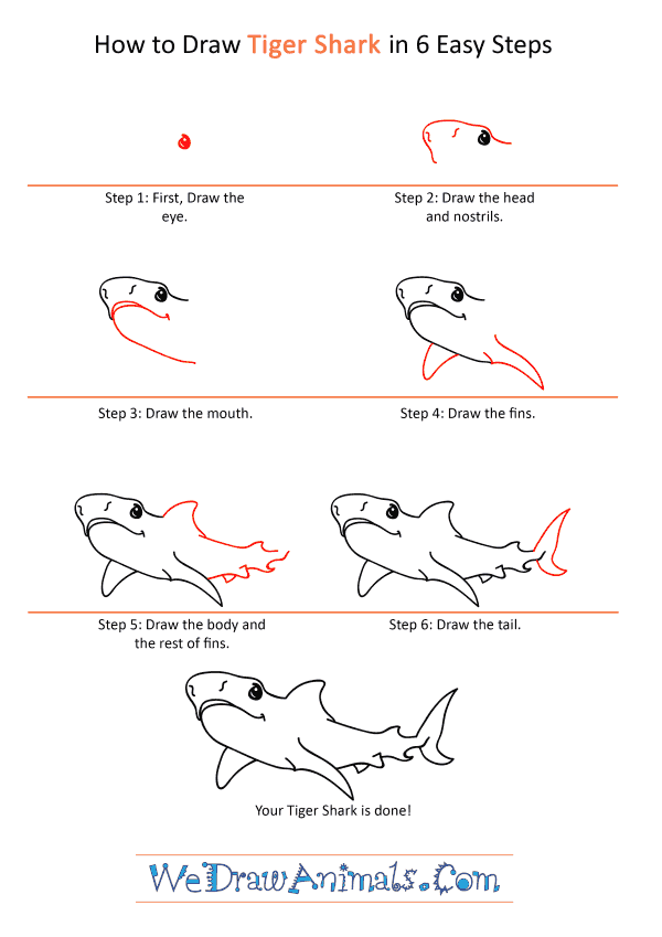 How to Draw a Cartoon Tiger Shark - Step-by-Step Tutorial