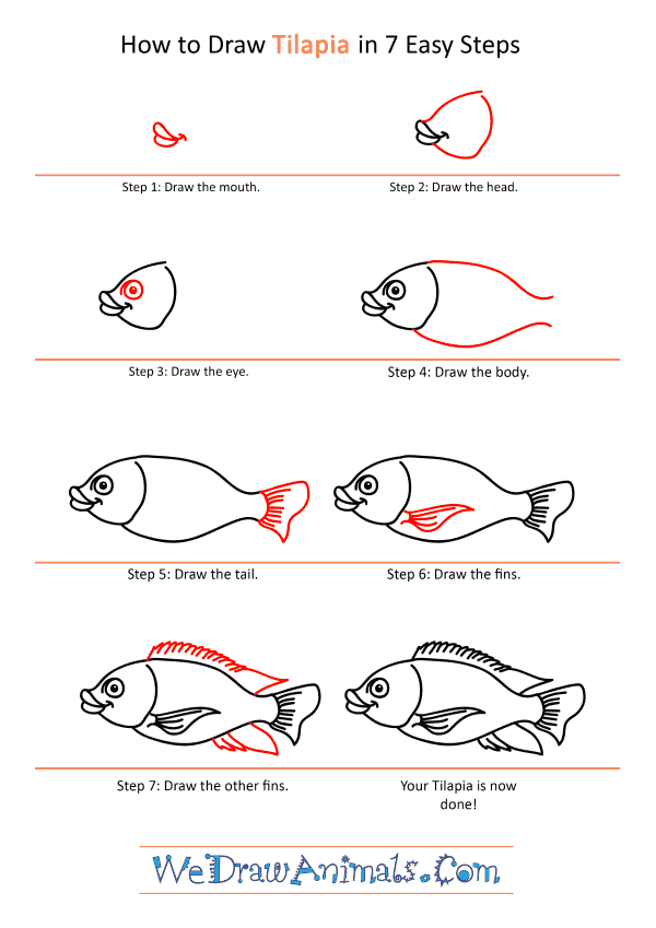 How to Draw a Cartoon Tilapia - Step-by-Step Tutorial