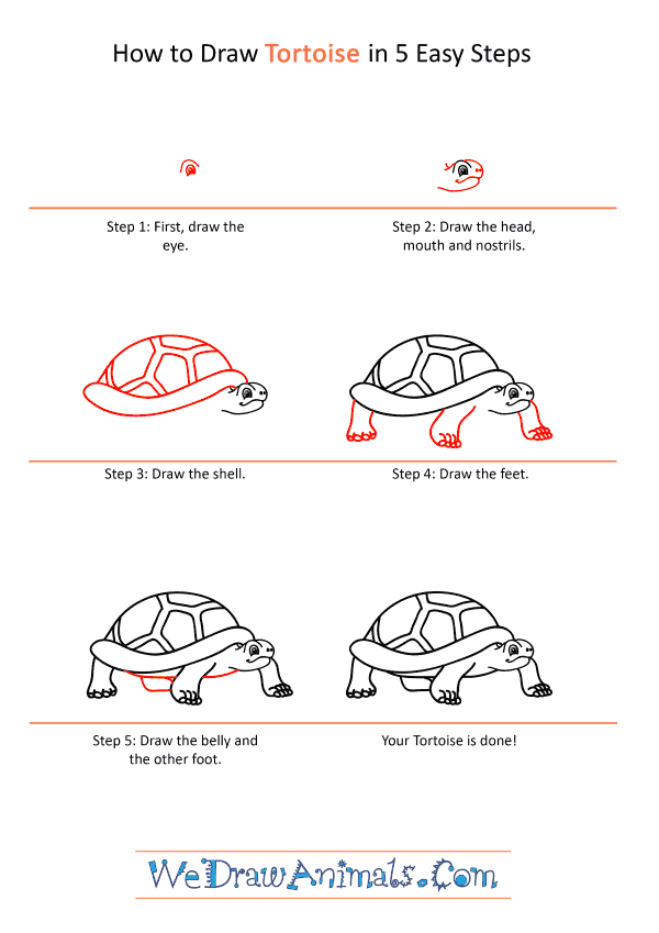 How to Draw a Cartoon Tortoise - Step-by-Step Tutorial