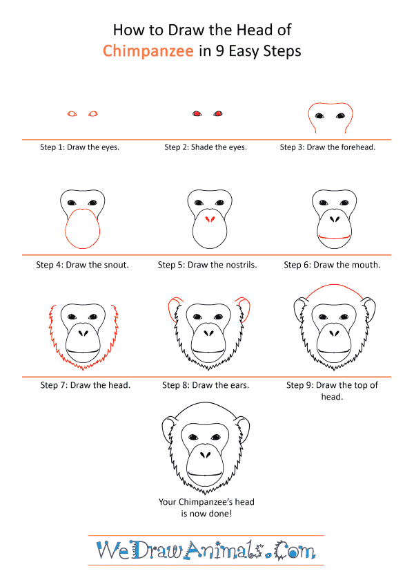 How to Draw a Chimpanzee Face - Step-by-Step Tutorial
