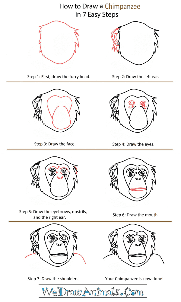 How to Draw a Chimpanzee Head - Step-by-Step Tutorial