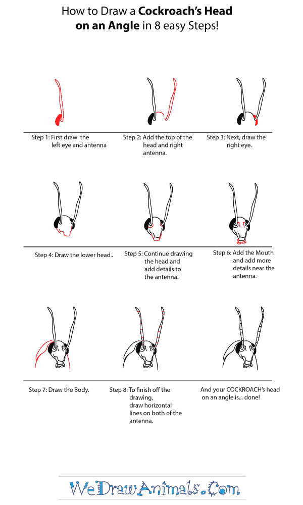 How to Draw a Cockroach Head - Step-by-Step Tutorial