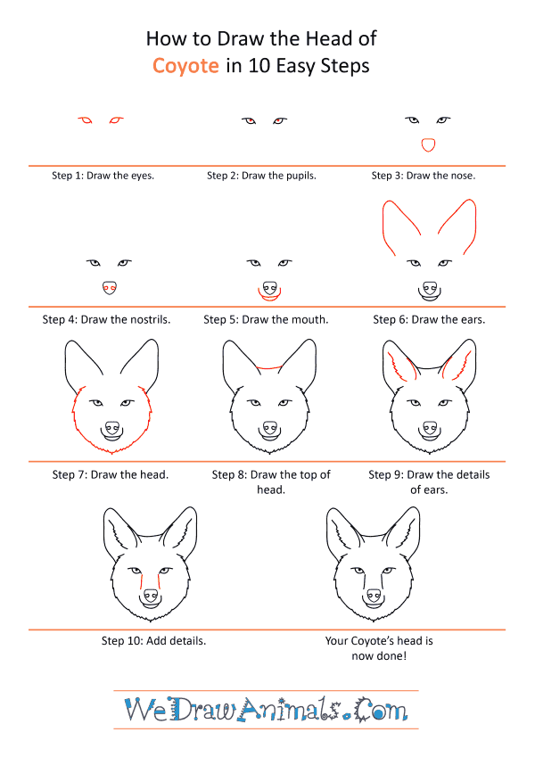 How to Draw a Coyote Face - Step-by-Step Tutorial