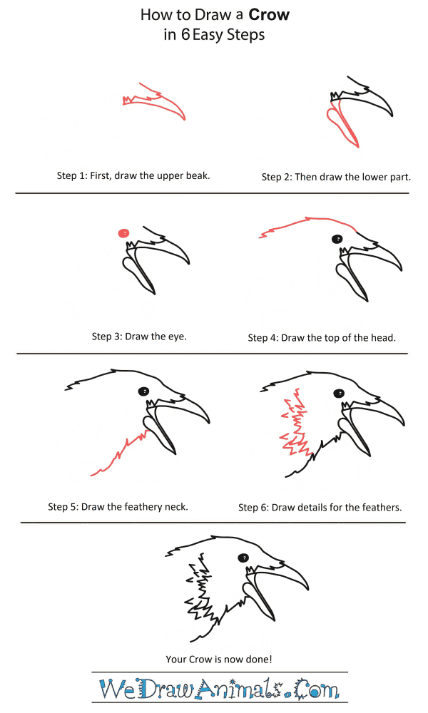 How to Draw a Crow Head - Step-by-Step Tutorial