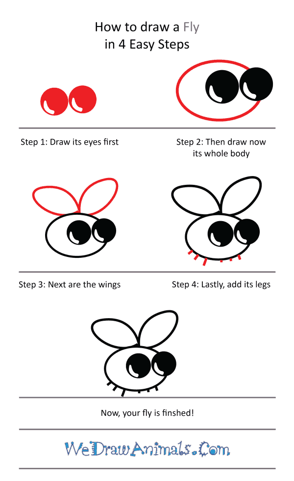 How to Draw a Cute Fly - Step-by-Step Tutorial