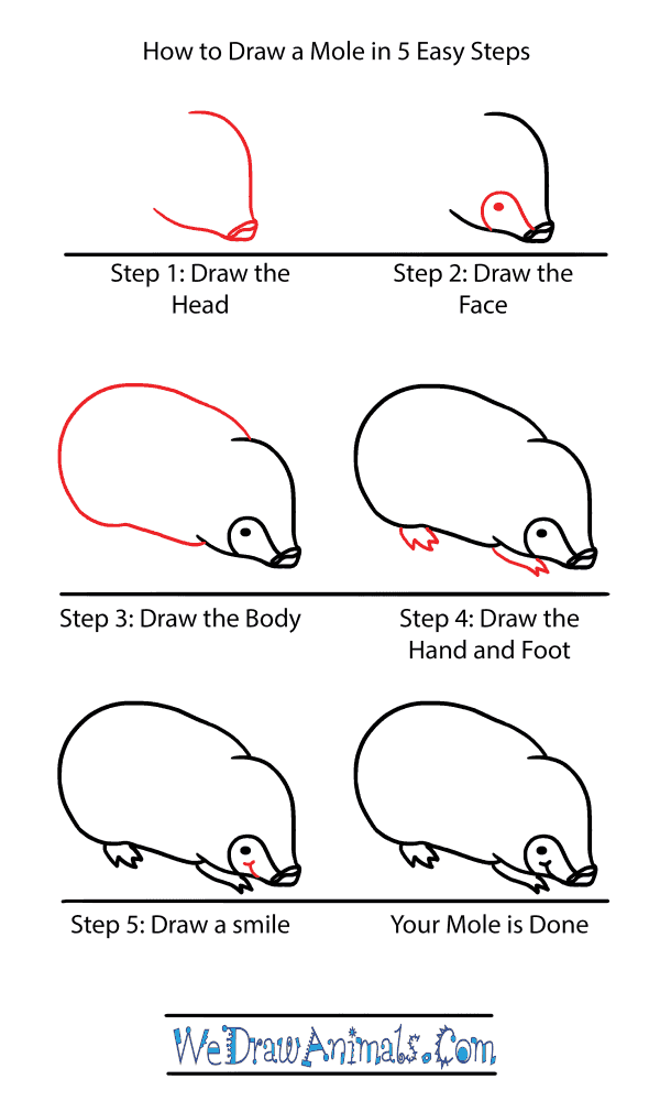 How to Draw a Cute Mole - Step-by-Step Tutorial