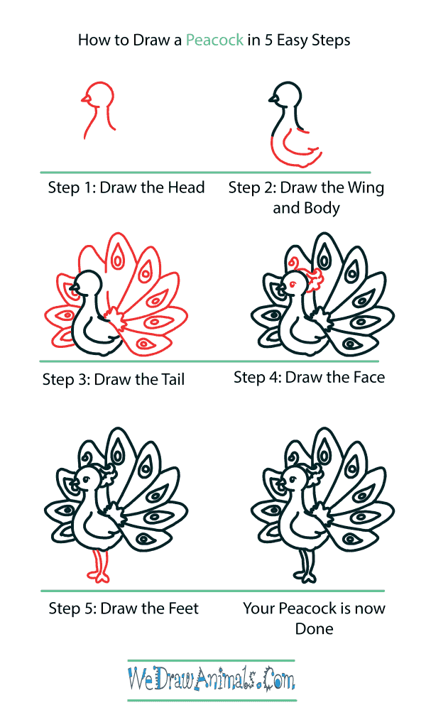 How to Draw a Cute Peacock - Step-by-Step Tutorial
