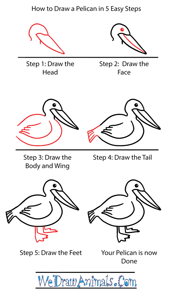 How to Draw a Cute Pelican - Step-by-Step Tutorial