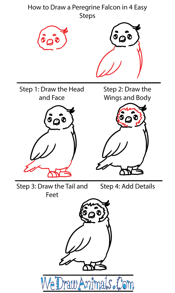 How to Draw a Cute Peregrine Falcon - Step-by-Step Tutorial